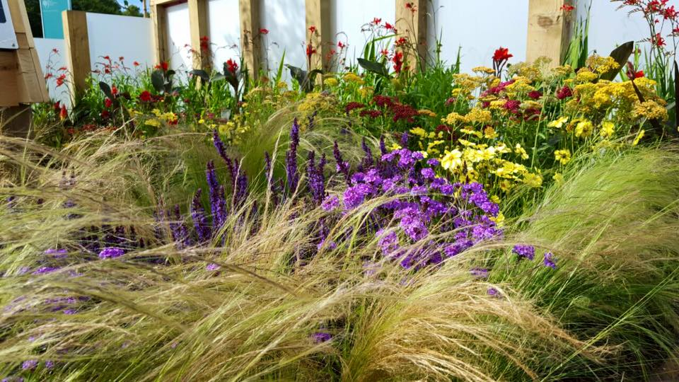Flowers planting schemes and border design dreamscape for Planting schemes for small gardens