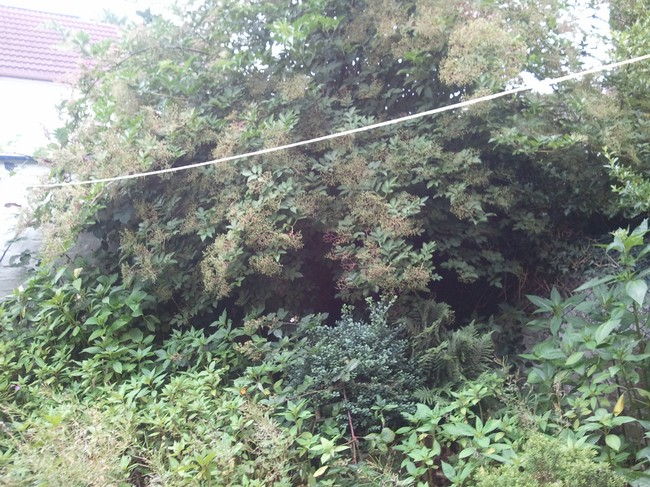 Bushes for chopping