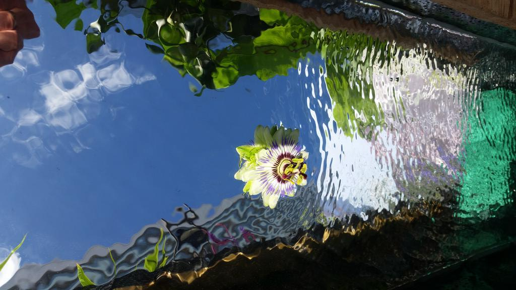 water feature passion flower