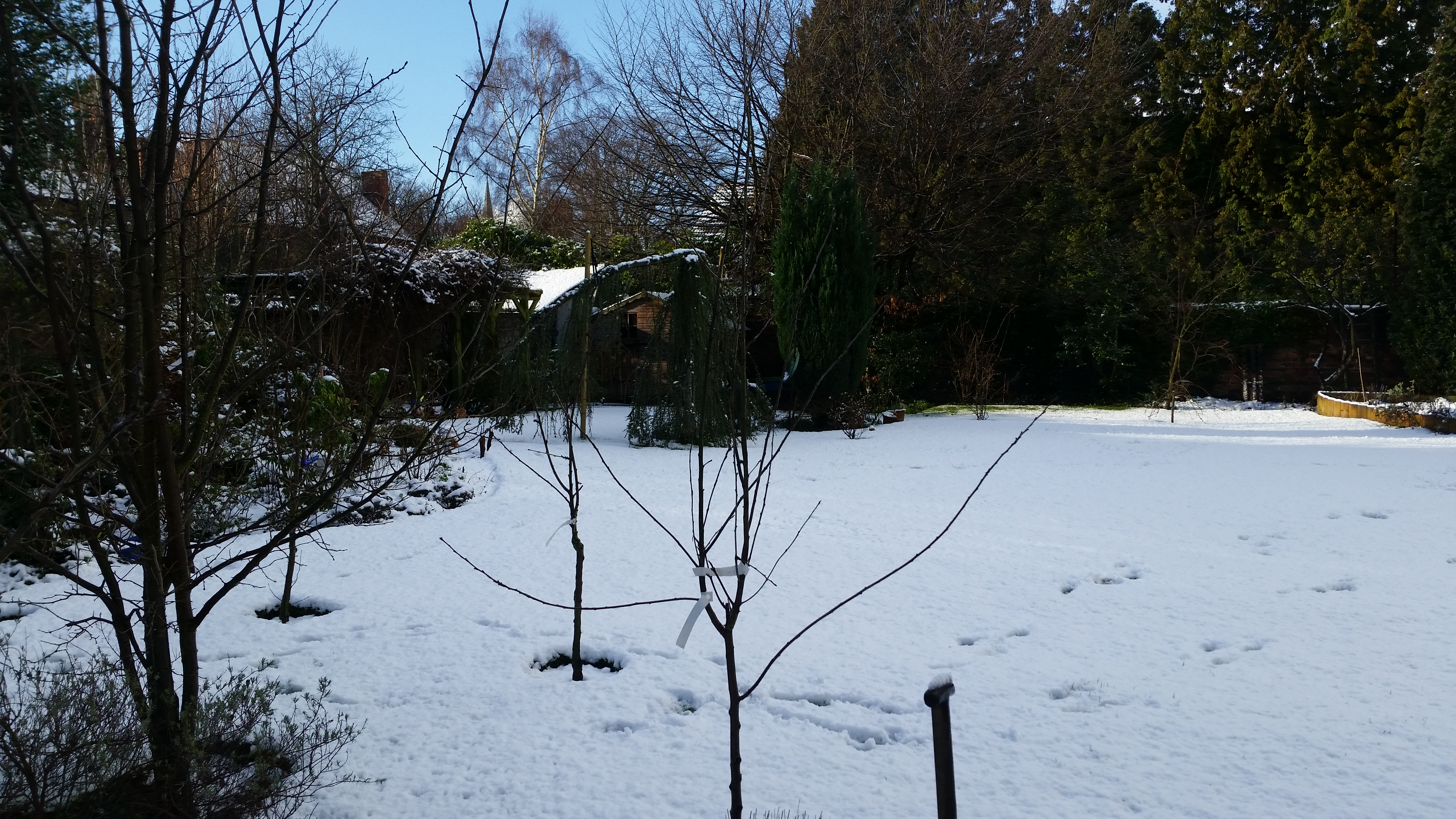 getting the best from your winter garden dreamscape gardens