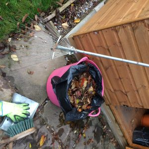 Everything you need to make leaf mould