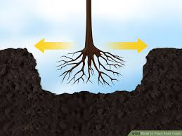 Hole needs to be wide enough for the roots