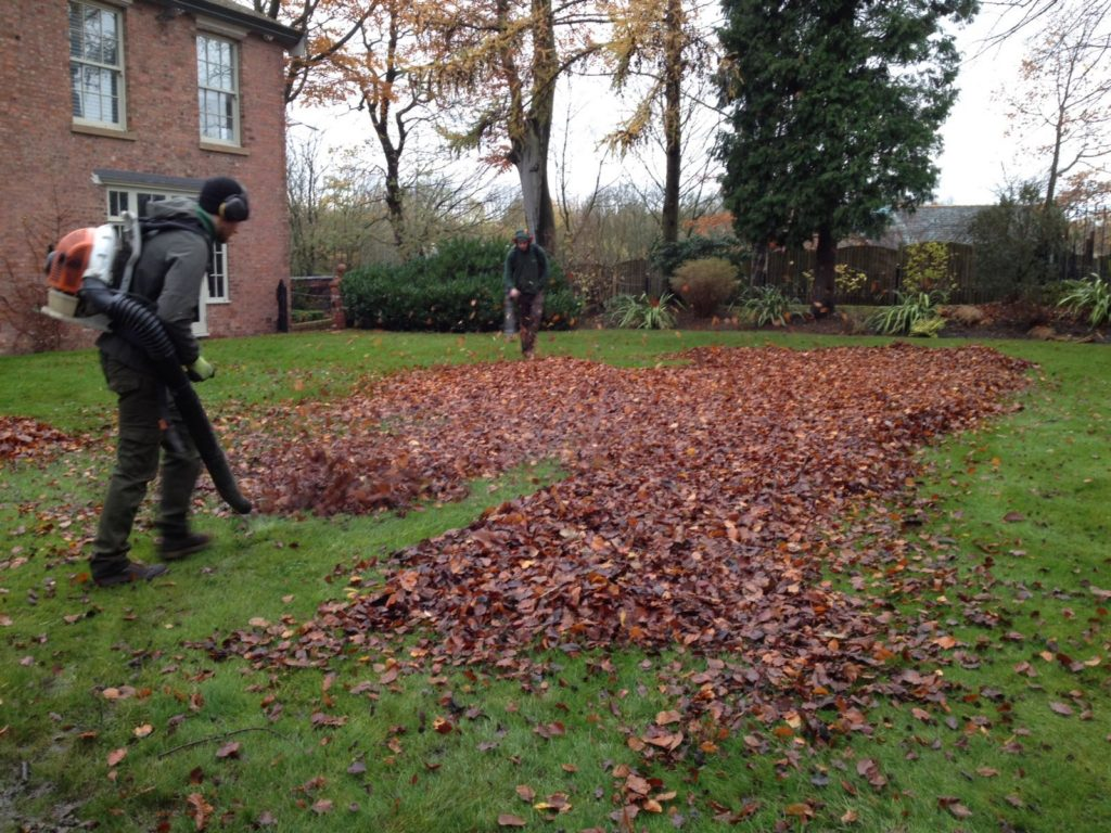 Clearing leaves in autumn
