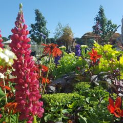 Garden Maintenance: Ensure Your Outdoor Space Continues To Flourish