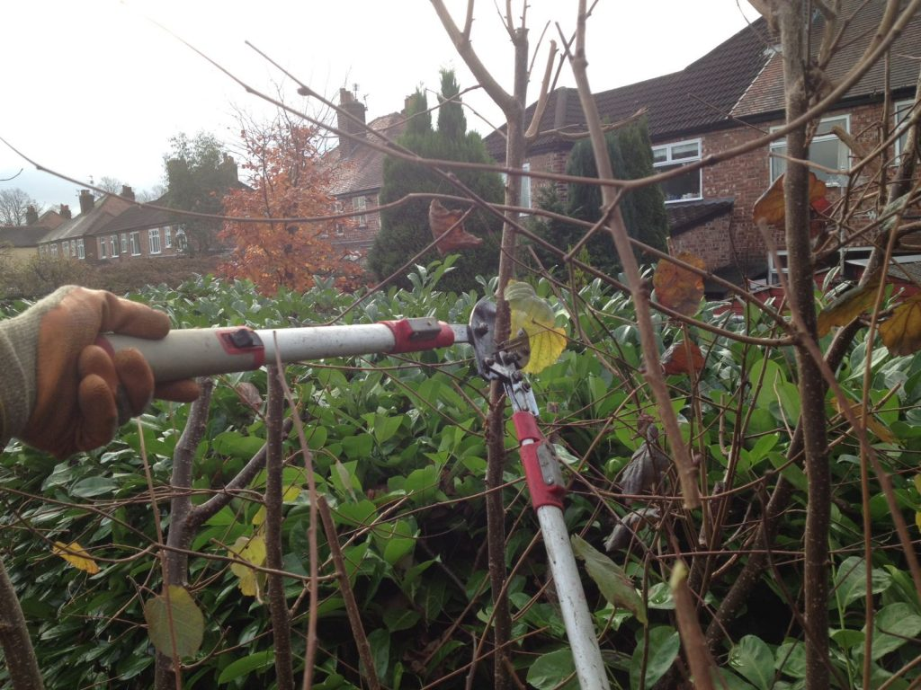 Dreamscape gardens hard pruning
