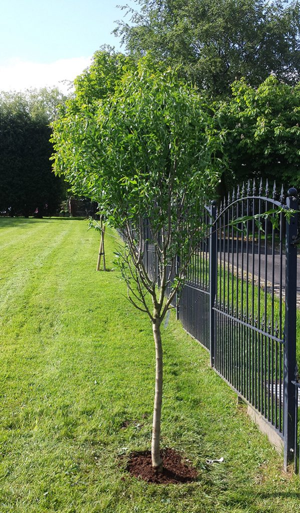 dreamscape gardens trees supplied planted
